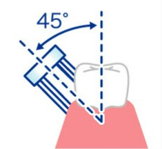 歯の磨き方 バス法の画像
