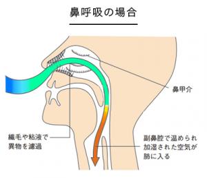鼻呼吸のイラスト