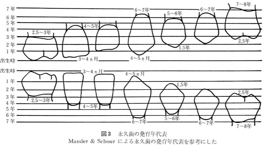 永久歯の発育年代表